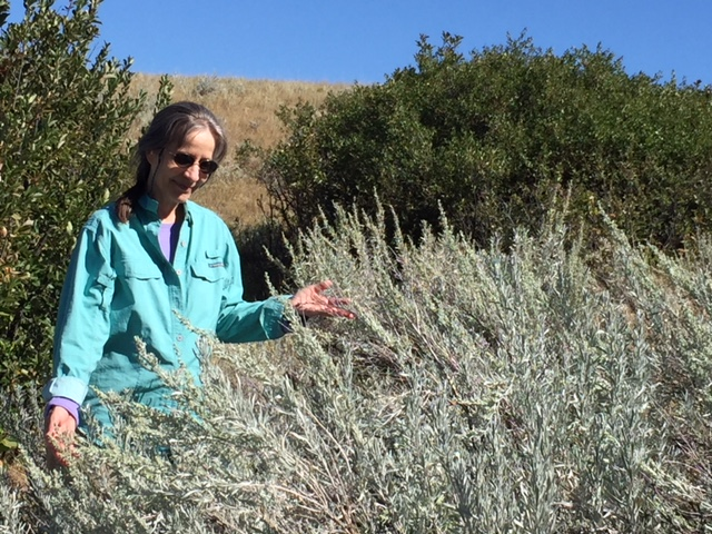 Denise in the mountain foothills with wild Wyoming sage